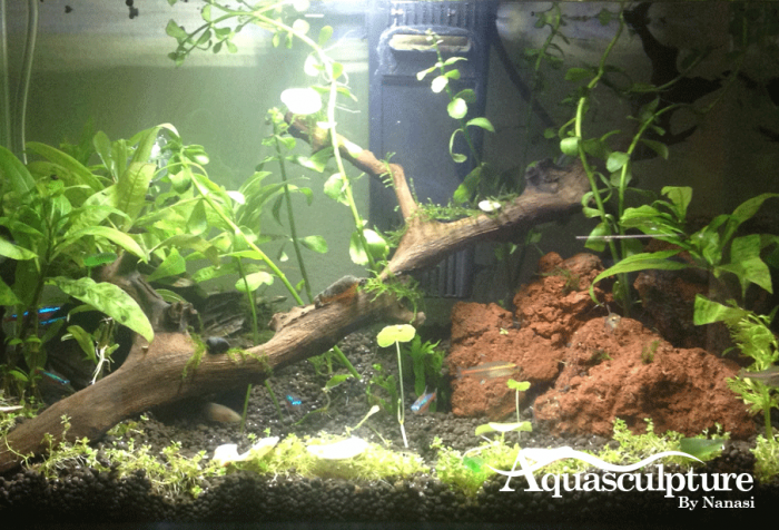 Plants-5